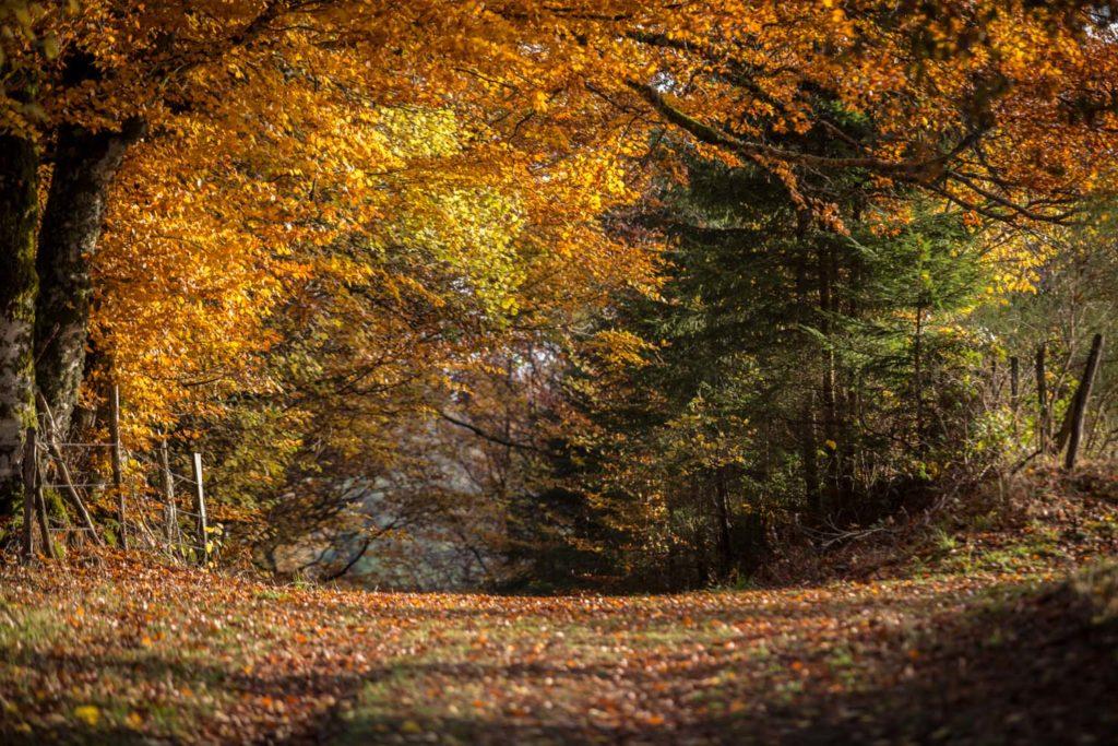 Corrèze en automne-4