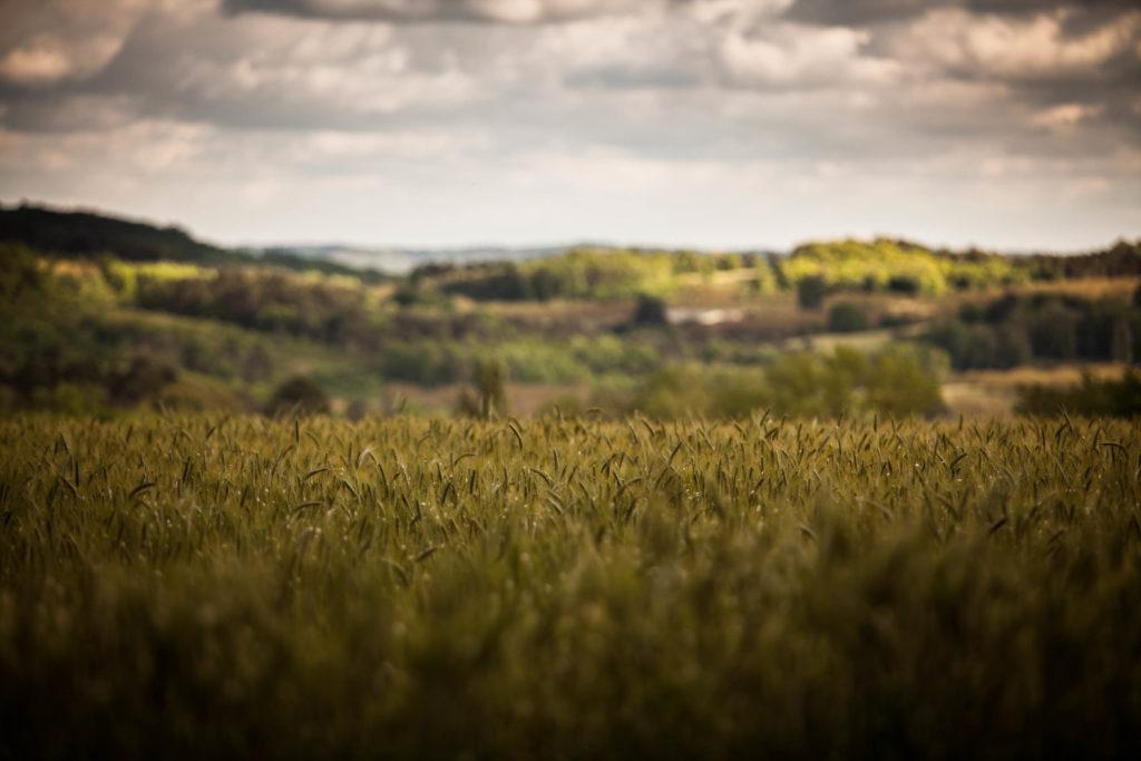 Les blés sarladais-1