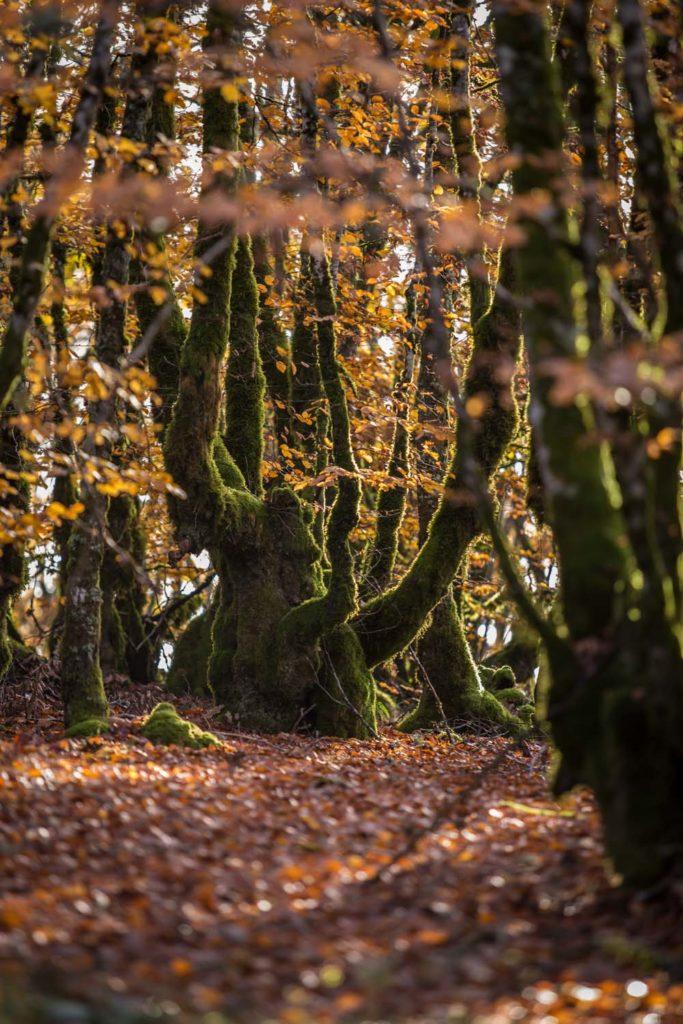 Corrèze en automne-1jpg