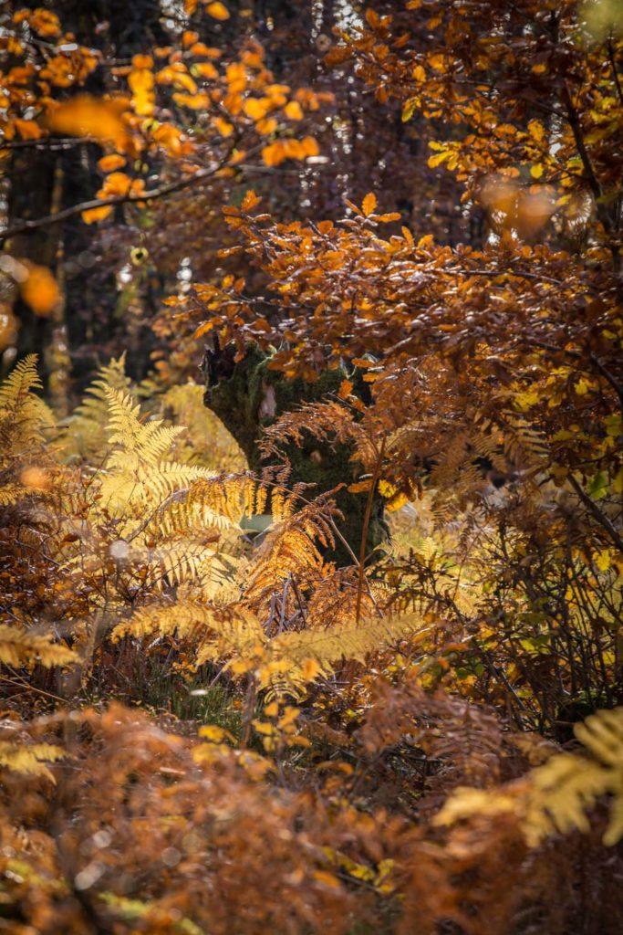 Corrèze en automne-2